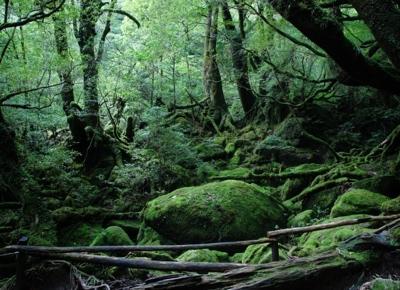 森のセラピー音でも、整体、腸もみでも、薬いらず!病気知らず!
